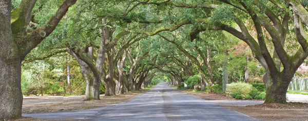 Tunnel of trees in South Carolina